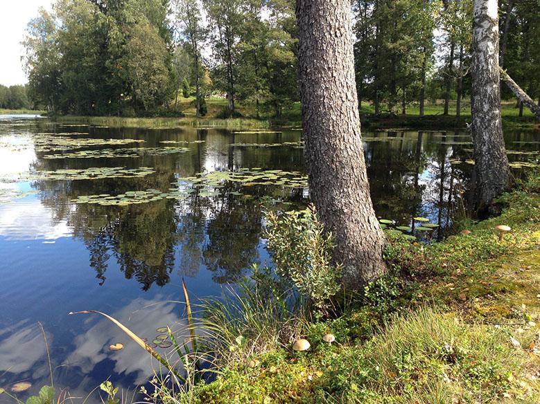 Fly fishing at Gustavsfors